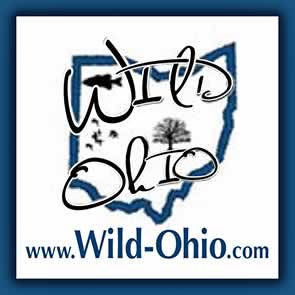 Wild-Ohio website